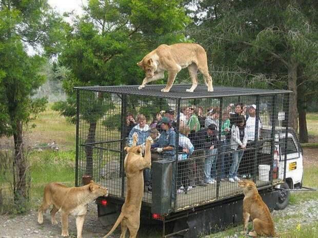 zoopark-zveri-7