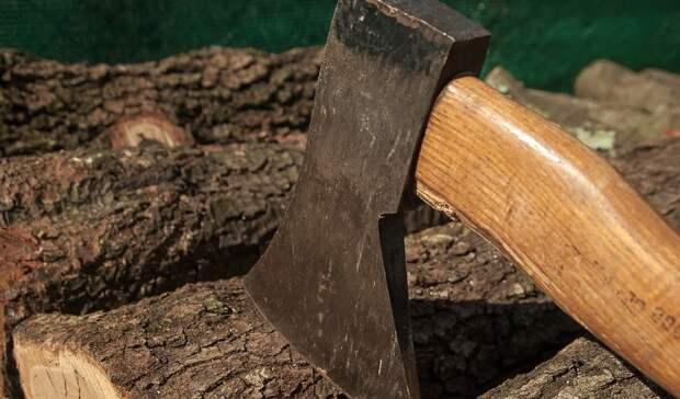 Омский предприниматель незаконно заработал 1.3млн рублей нарубке леса
