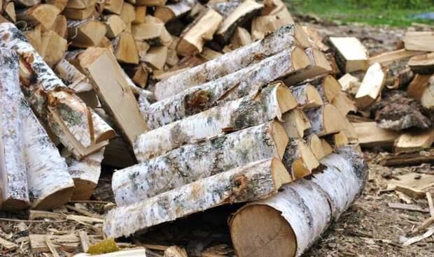 Почему одни дрова дают больше тепла, чем другие: как выбрать правильные