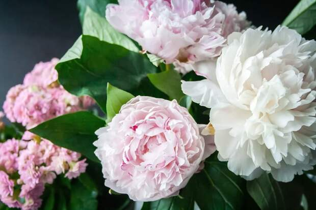 flower-823655_1920