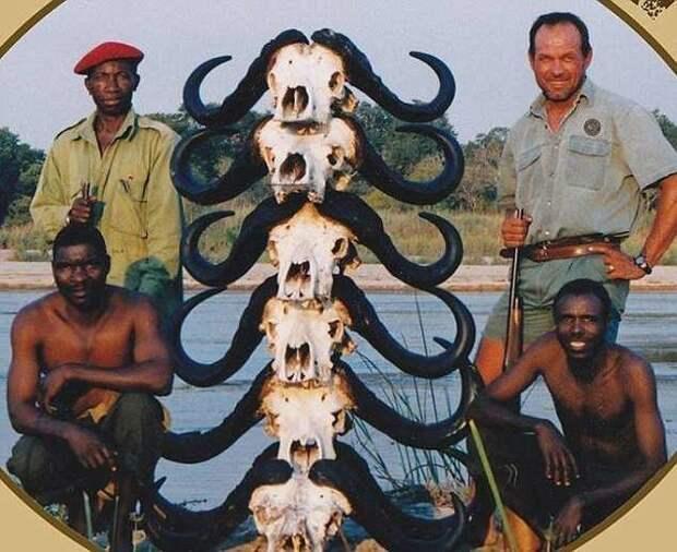 Буйвол отомстил охотнику за сородича, убив его, когда тот грузил тушу на джип буйвол убил охотника, животные, месть за сородича, сафари