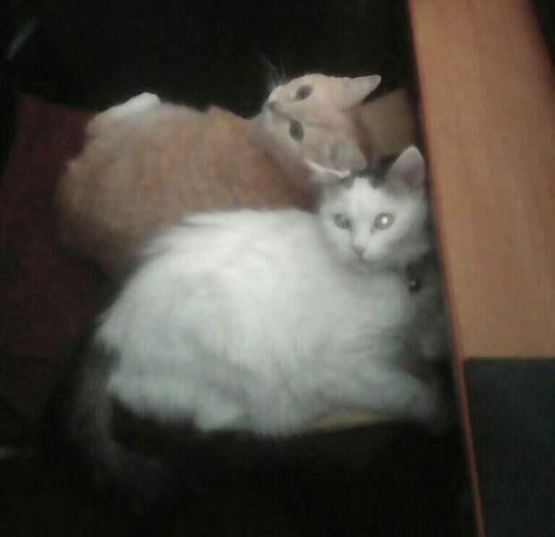 Коты считают, что это они нас приютили. За еду!