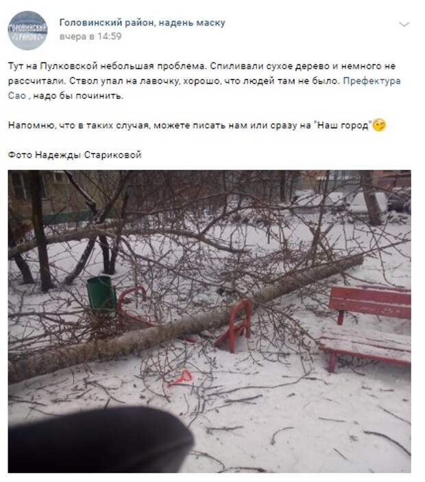 Лавочка на Пулковской сломалась под напором рухнувшего дерева