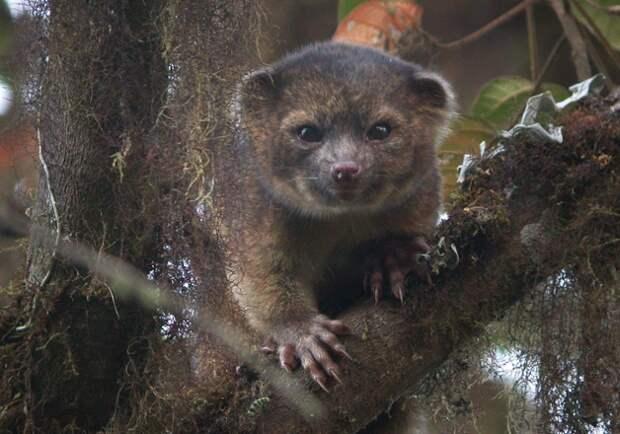 ТОП-10 видов, обнаруженных на нашей планете в прошлом году