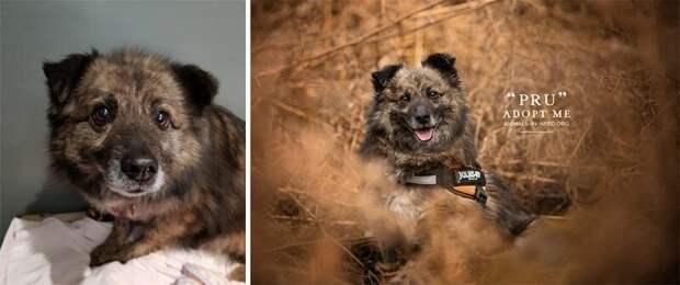5. Пру животные, помощь, портрет, приют, собака, фотограф, хозяин