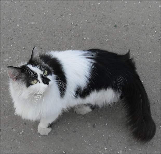 Записки ветеринара. Смешные случаи на улице