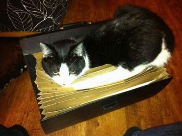 смешные кошки коты, кошки странные места поспать, коты неподходящие места прилечь, кошки выбирают место