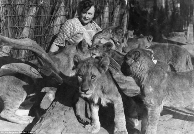 Мюриэл Гэй со своими питомцами архивные снимки, архивные фото, дрессированные, дрессировщик, лев, львы, сша