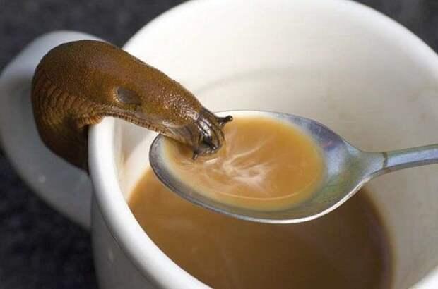 кофе улитка