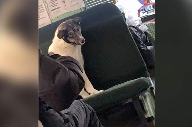«Погрейся, Бобик!»: в Якутии водитель маршрутки в аномальный мороз пустил в салон бродячих собак