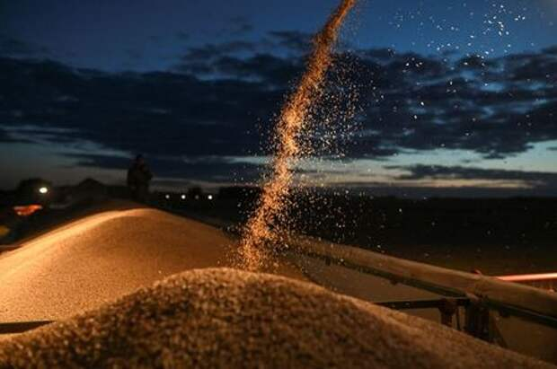 A combine loads a truck with wheat during harvesting in a field of Triticum farm in Omsk region, Russia September 16, 2020. Picture taken September 16, 2020. REUTERS/Alexey Malgavko