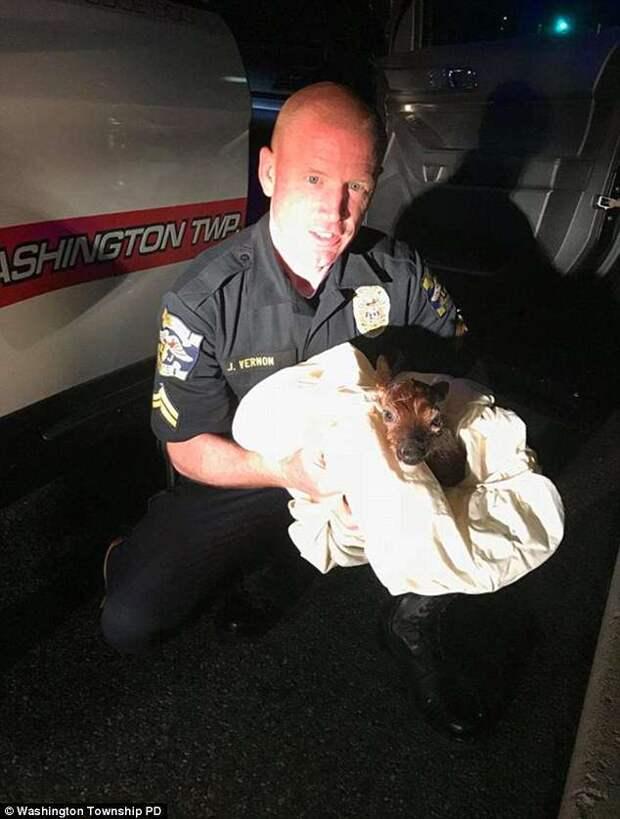Полицейский спас малыша беременной оленихи, которую сбила машина