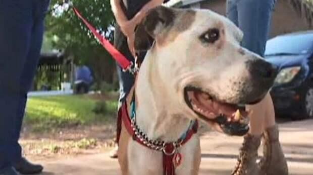 Женщина хотела, чтобы кто-то присмотрел за ее собакой, после ее смерти. Но песика похитили