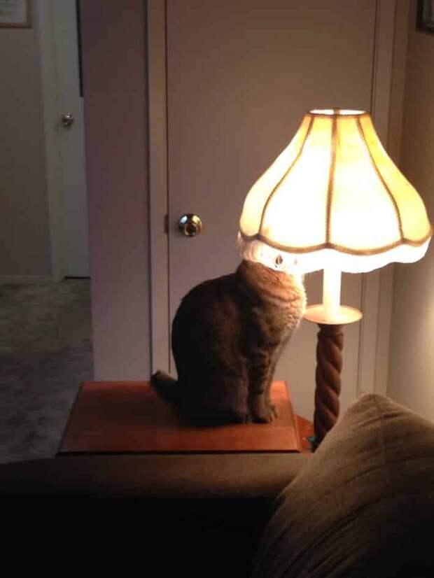 10 фотографий, доказывающих, что котики милые, но очень странные