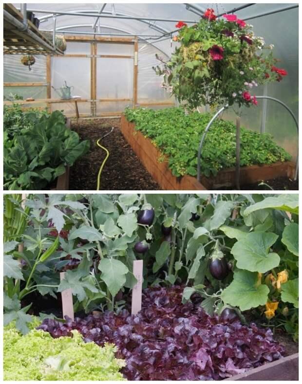 Грамотное зонирование и уплотнение – залог хорошего урожая.