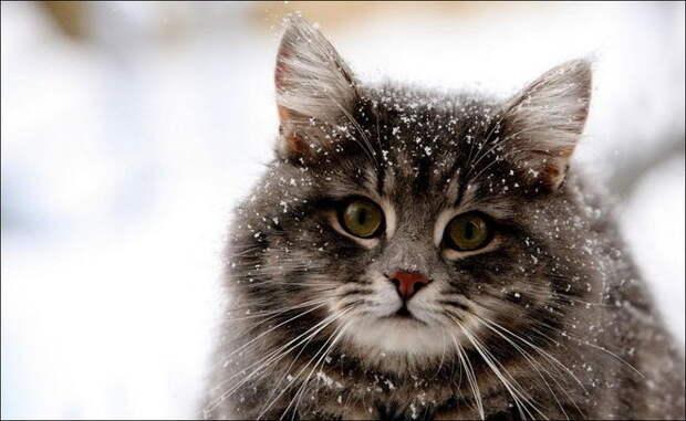 Самое интересное о кошках