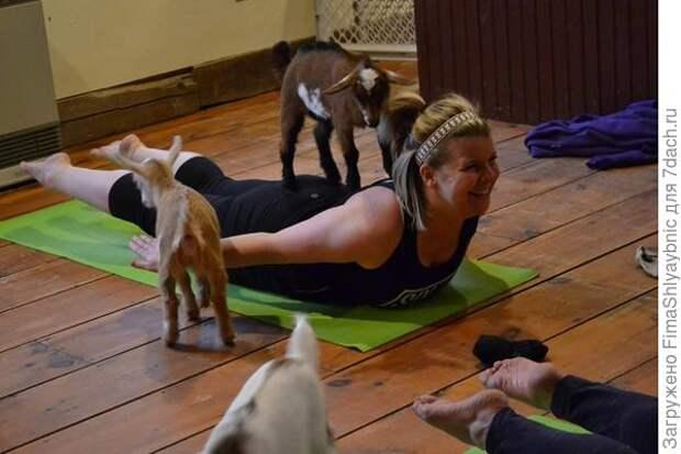 Козлята принимают живейшее участие в занятиях. Фото с сайта Facebook.com