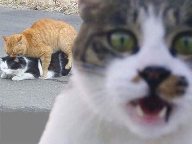 16 котиков, которые удачно влезли в кадр
