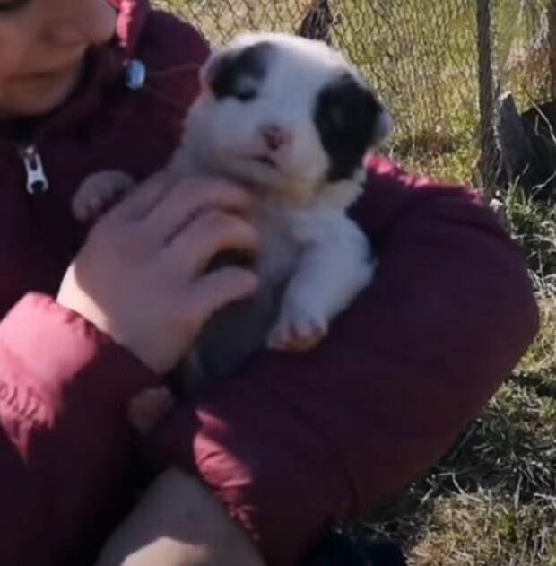 Маленький беззащитный щенок бродил по стройке и скулил от голода