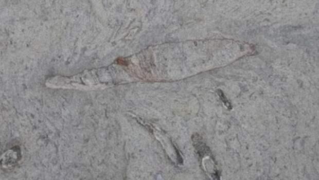Палеонтологи обнаружили следы огромных древних червей у берегов Тайваня