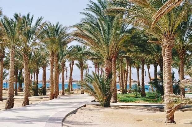 В АТОР спрогнозировали стоимость тура в Египет после открытия чартеров