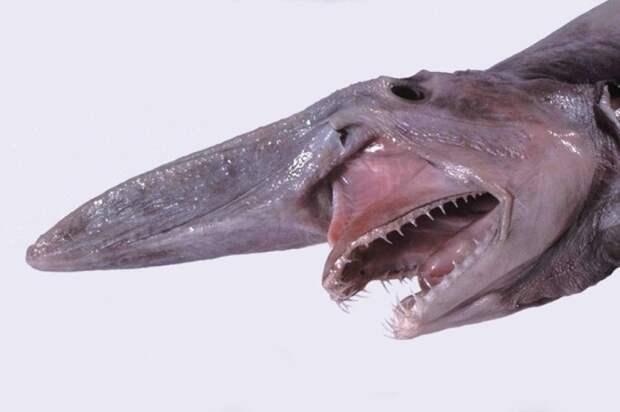 8. Акула-домовой животные, природа, странности
