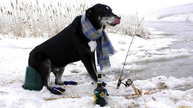 Чтобы не дать замерзнуть своему хозяину,  собака тащила его за веревку 5 километров