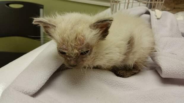 От загадочной болезни этот малыш лишился шерсти на мордочке и животе