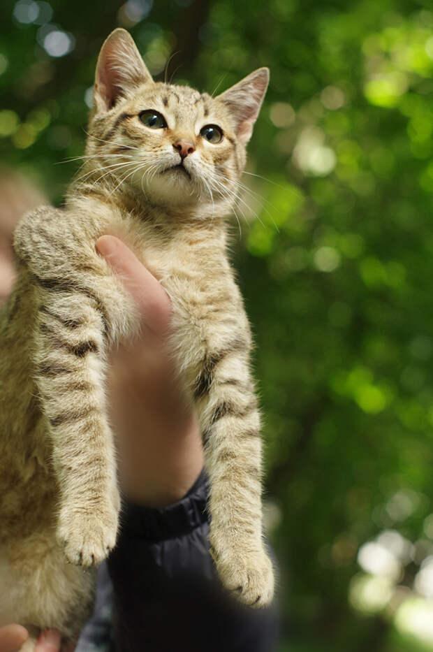 Котята могут остаться на улице и погибнуть
