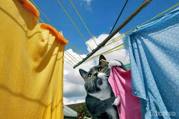Хозяйственный кот