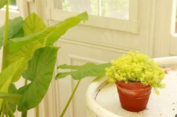 Растения умеренного пояса привычны к отсутствию солнечного света