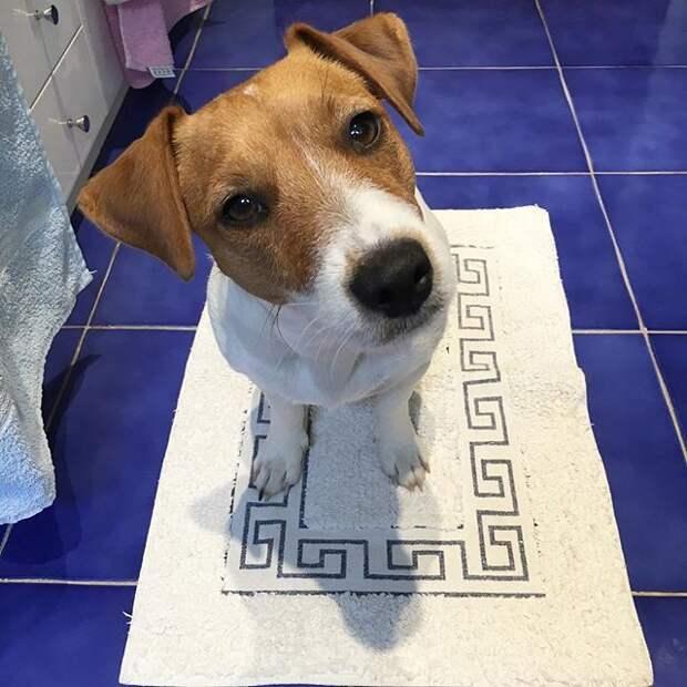 10 причин, почему собаки идут за вами даже в туалет и ванную