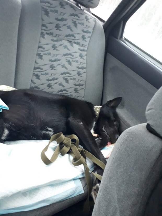 Пес с грустным взглядом ютился под балконом дома истории спасения, пес, приют, собака