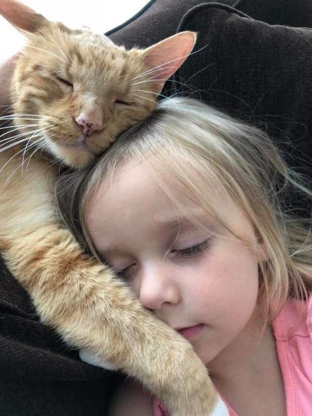 «Не выгоняйте Бейли!»: девушке чудом удалось оставить у себя котика, ставшего другом для ее семьи