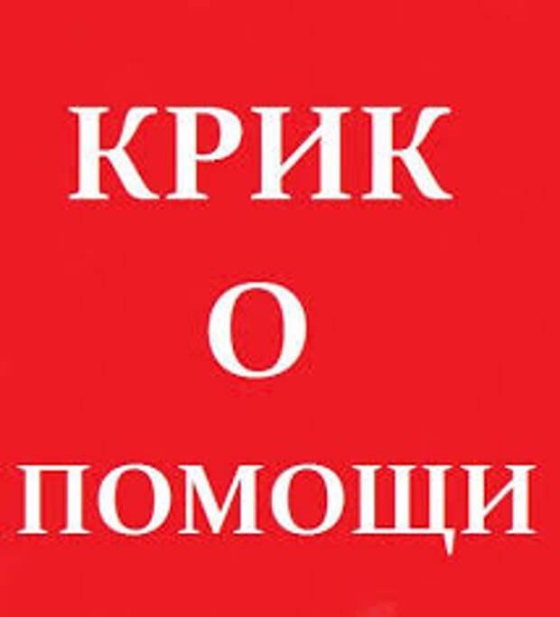 Уважаемые петербуржцы, пожалуйста, помогите забрать котяток с улицы, пока не поздно...