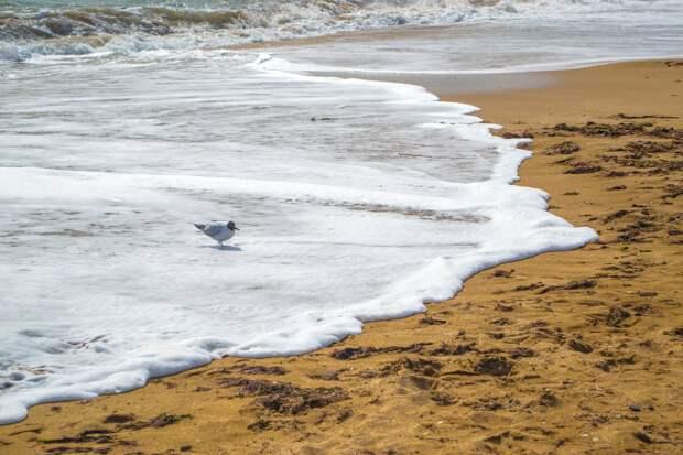 """Власти Феодосии попросили туристов не отдыхать на пляже """"Песчаная балка"""""""