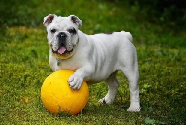 """«Как это называется?"""": в Приморье собаки испражнялись прямо на пришкольном стадионе"""