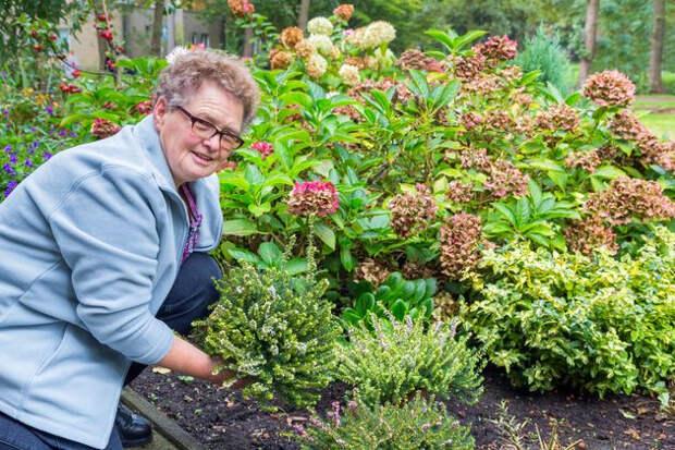 Сад и цветник: пересадить можно почти все