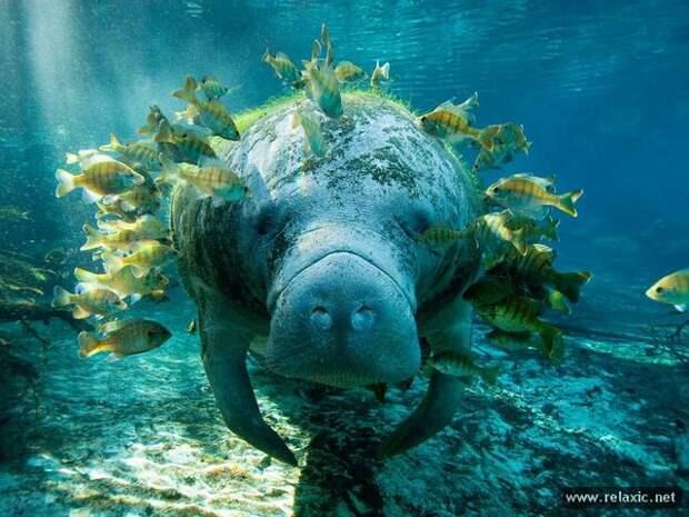 Подводный мир от National Geographic (30 фото)