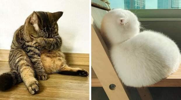 20 смешных фото котов, которые обиделись на своих хозяев