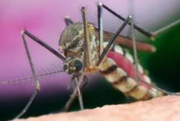 Пандемия коронавируса привлекла на Ибицу полчища комаров-убийц