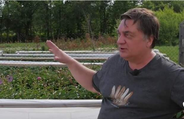 Личный опыт: Андрей Туманов о борьбе с тлей