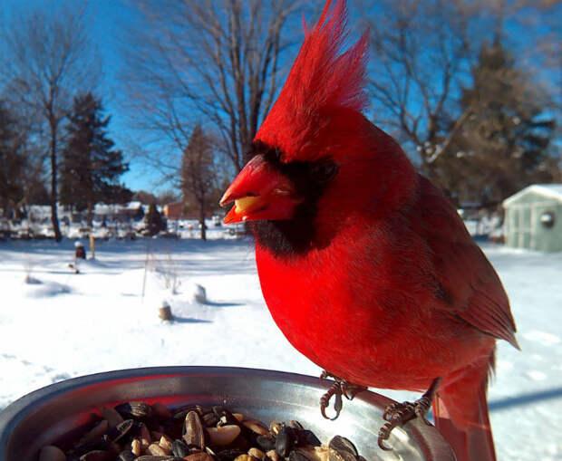 Женщина прикормила птиц и делает потрясающие портреты, пока они едят