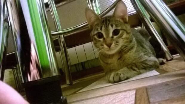 Удивительная кошка, которая прошла грань между жизнью и смертью!