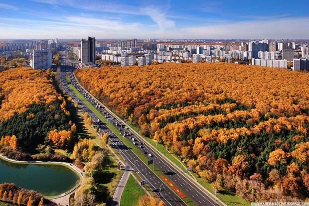 В Москве и области объявили желтый уровень погодной опасности из-за ветра