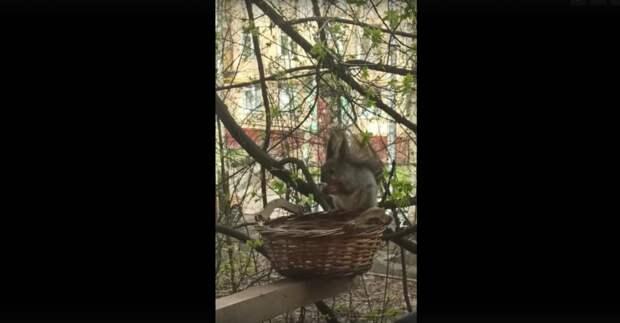 Белка пришла позавтракать на балкон в Северном Тушине