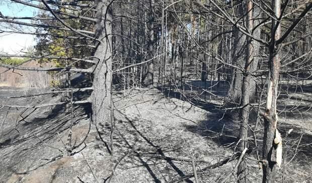 Первые лесные пожары зафиксированы в Удмуртии