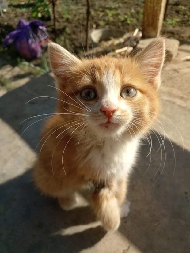 Ехала на дачу и увидела на обочине маленького котёнка с огромной раной на лапке