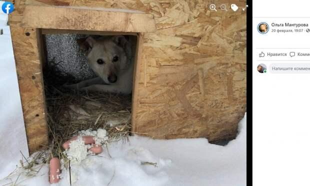 Жители Митина проявили неравнодушие к судьбе замерзающей собаки