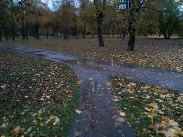 Москвичам пообещали дождливую пятидневку